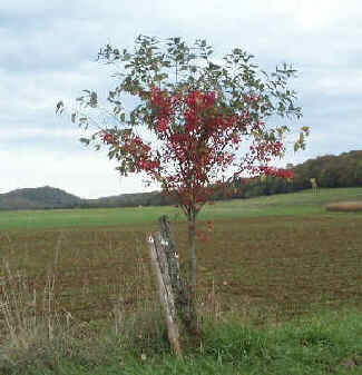 Lison rouge l 39 automne for Portent ses fruits